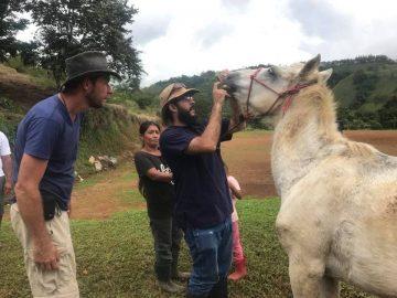 Adolfo examing horse mouth