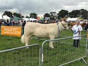 Three Shires Cattle Trophy-Moreton Show 2019