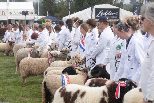 Moreton In Marsh Show 2021-Rare and Minority Sheep Inter-Breed Championship Sponsors